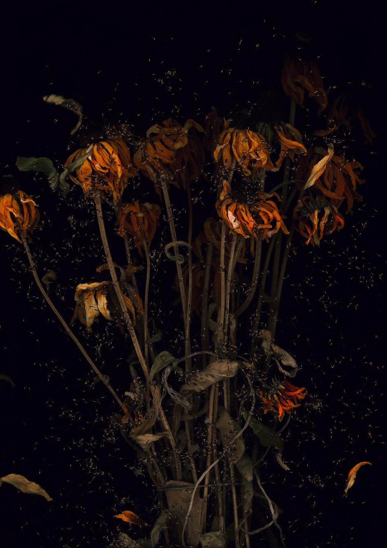 Echinacea by Harald Geisler
